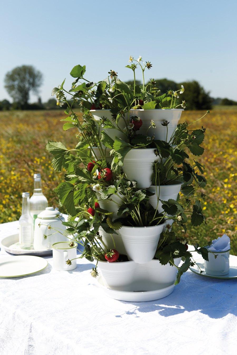 La rivoluzione green per coltivare un orto in casa