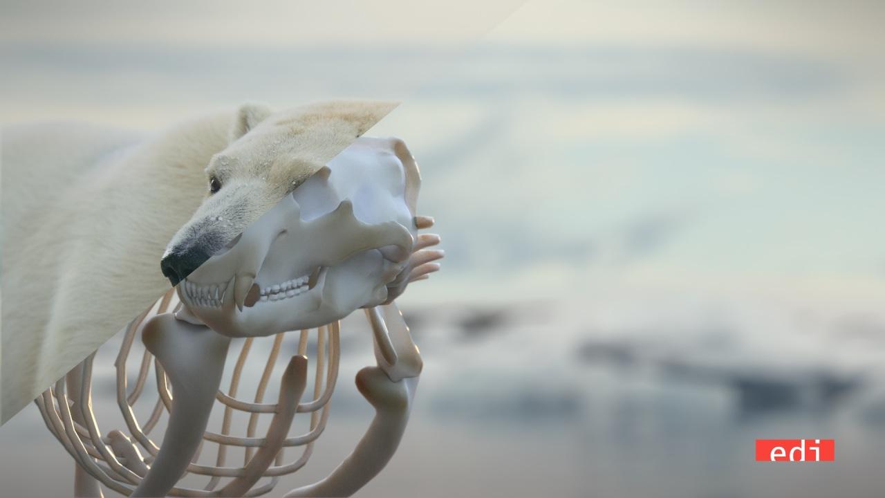 Alla vigilia di Earth Hour WWF lancia un video firmato da Gabriele Muccino sull'orso polare