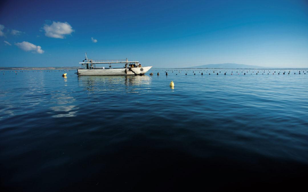 Le cozze raccolte nel Golfo di Oristano: sapore e sicurezza garantiti Nieddittas