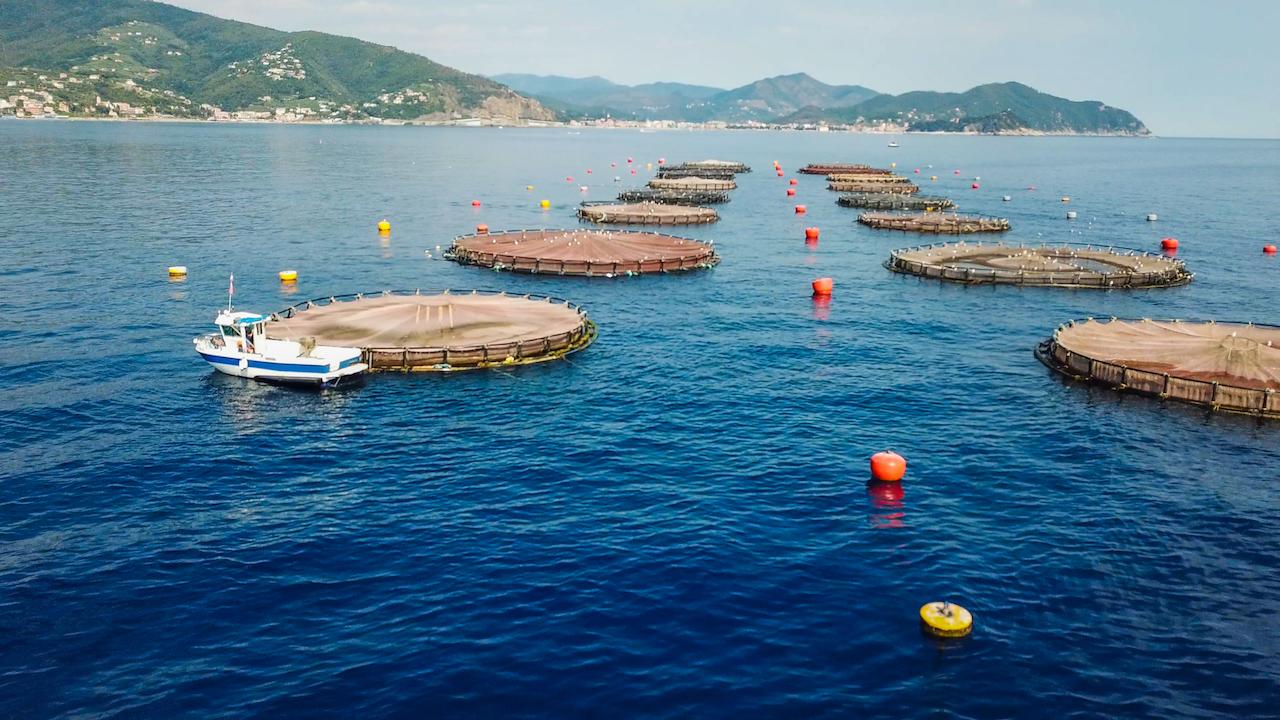 AQUA testimonial della qualità ambientale del mare di Lavagna
