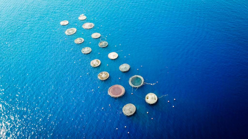 L'Europa punta sull'economia blu e l'acquacoltura sostenibile